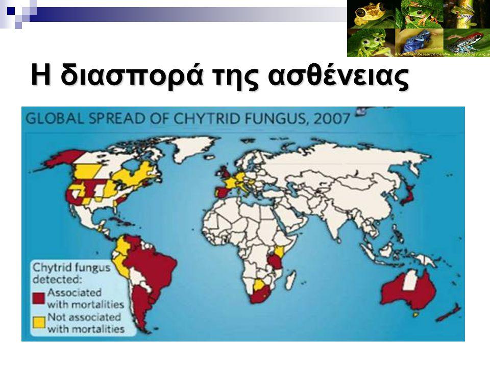 Τι είναι αυτή η ασθένεια; Δρ Joe Mendelson Όπως δηλώνει ο Δρ Joe Mendelson, του Ζωολογικού Κήπου της Atlanta, «αυτό που αντιμετωπίζουμε σήμερα με την Χυτριδιομυκητίαση στα Αμφίβια, είναι γεγονός αντίστοιχου μεγέθους με την εξαφάνιση των Δεινοσαύρων…!!!»
