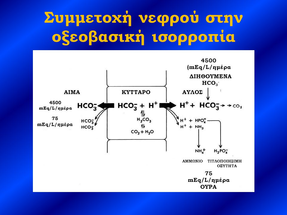 Συμμετοχή νεφρού στην οξεοβασική ισορροπία 4500 (mEq/L/ημέρα ΔΙΗΘΟΥΜΕΝΑ HCO 3 - ΑΜΜΩΝΙΟ ΤΙΤΛΟΠΟΙΗΣΙΜΗ ΟΞΥΤΗΤΑ 75 mEq/L/ημέρα ΟΥΡΑ 4500 mEq/L/ημέρα 75 mEq/L/ημέρα AIMAΑΥΛΟΣΚΥΤΤΑΡΟ