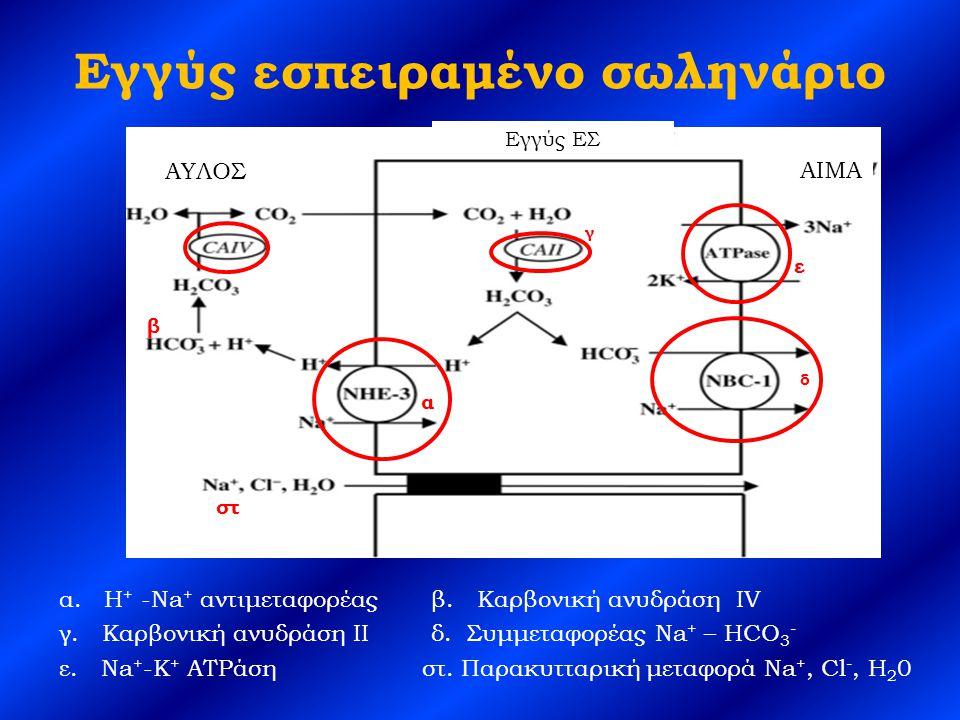 Ρύθμιση επαναρρόφησης διττανθρακικών στο εγγύς ΕΣ Δράση της καρβονικής ανυδράσης Εξωκυττάριος όγκος υγρών Ολικό Κ + οργανισμού Τάση της PCO 2 Συγκέντρωση Ca 2+ Συγκέντρωση P PTH
