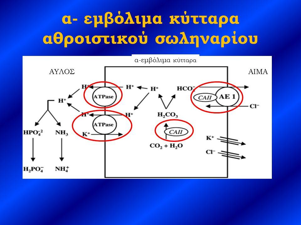 Διαλύματα διττανθρακικών Διάλυμα/σκεύασμαΠεριεκτικότητα σε HCO 3 - Διάλυμα Shohl (500 mg κιτρικού Na + ) Κάθε ml περιέχει 1 mEq Na + και αποδίδει και 1 mEq HCO 3 - Δισκία NaHCO 3 3,9 mEq/δισκίο (325) 7,8/δισκίο (650) Σόδα φαγητού 60 mEq/μικρό κουταλάκι Polycitra Κιτρικό Na + (500 mg) Κιτρικό Κ + 500 mg Κιτρικό οξύ (334 mg/ml) Κάθε ml περιέχει 1 mEq Κ + και 1 mEq Na + και αποδίδει και 2 mEq HCO 3 - Κρύσταλλοι Polycitra Κιτρικό K + (3300 mg) Κιτρικό οξύ (1002 mg/φακελάκι) Κάθε φακελάκι περιέχει 30 mEq Κ + και 30 mEq HCO 3 - Δισκία Urocit-K Κιτρικό Κ + 5-10 mEq/δισκίο