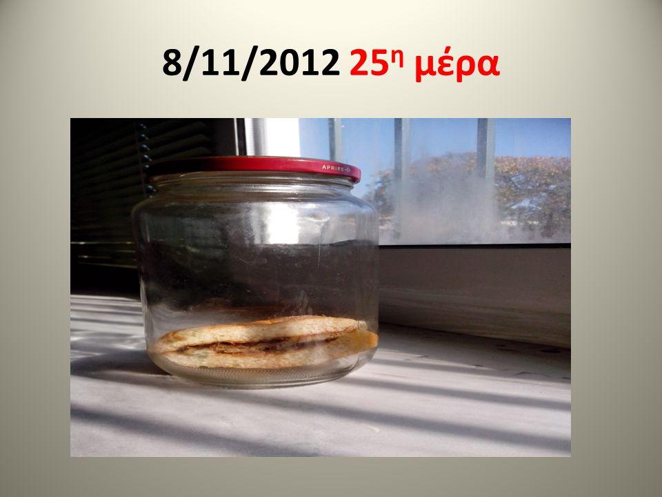 8/11/2012 25 η μέρα