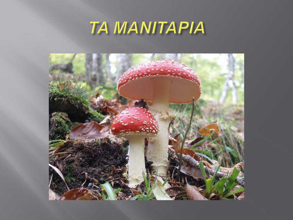  Τα μανιτάρια ανήκουν σε μια μεγάλη ομάδα οργανισμών τους μύκητες.