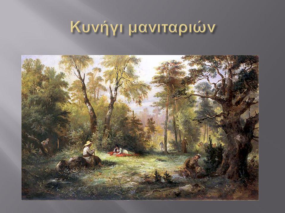  Το κυνήγι ή μάζεμα του μανιταριού περιγράφει τη δραστηριότητα της συλλογής μανιταριών στην άγρια φύση, συνήθως για φαγητό.