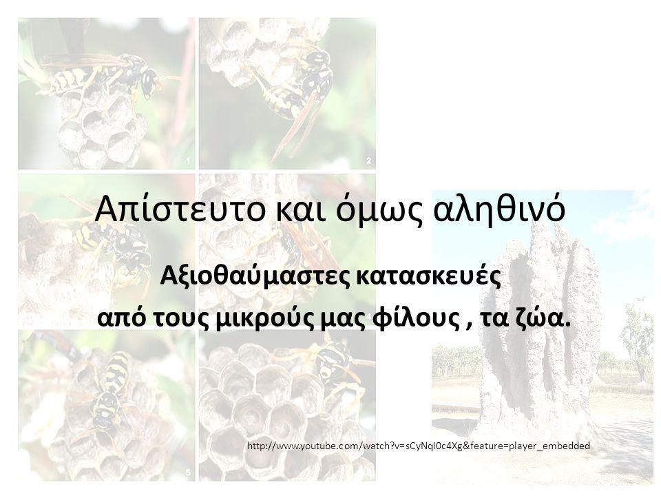 Στις τροπικές περιοχές, αναχώματα (φωλιές) τερμιτών μπορούν να γίνουν τεράστια.