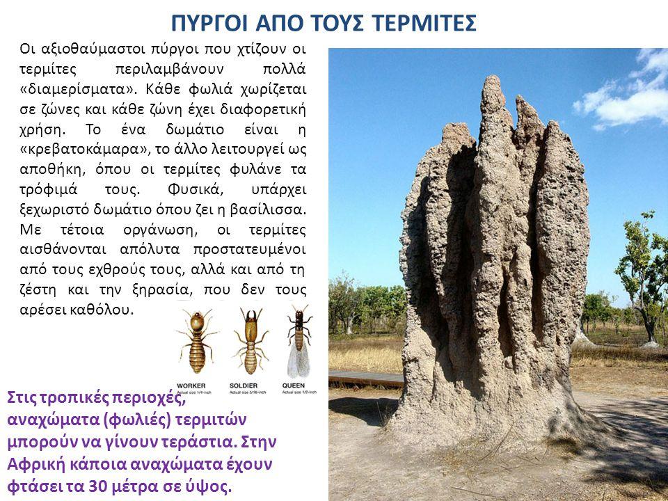 Η μεγαλύτερη αποικία μυρμηγκιών.