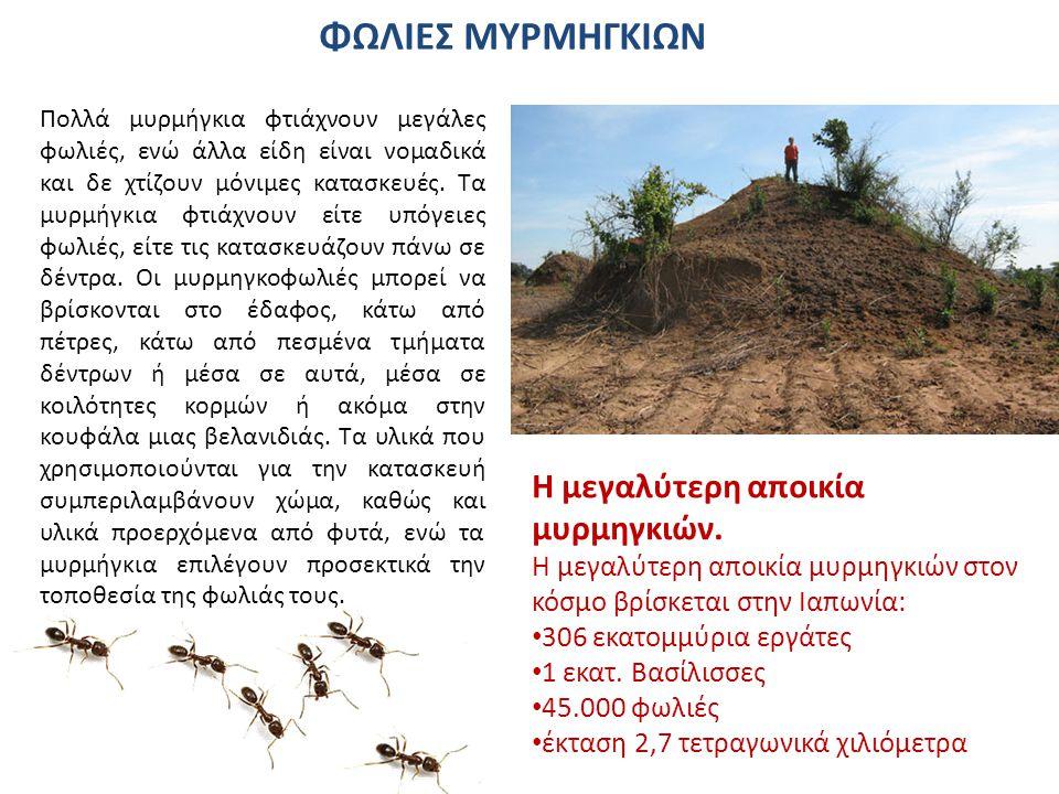 Μια διεθνής ομάδα ερευνητών, εντόπισε το μεγαλύτερο ιστό αράχνης στον πλανήτη, σε ένα τροπικό ποτάμι της Μαδαγασκάρης.