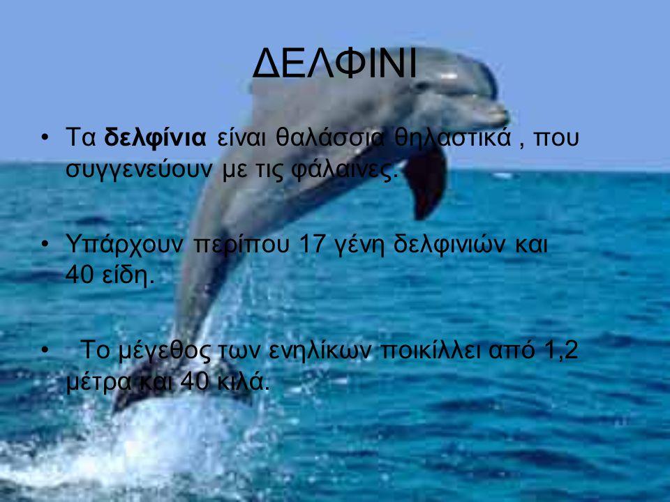 ΔΕΛΦΙΝΙ Τα δελφίνια είναι θαλάσσια θηλαστικά, που συγγενεύουν με τις φάλαινες. Υπάρχουν περίπου 17 γένη δελφινιών και 40 είδη. Το μέγεθος των ενηλίκων