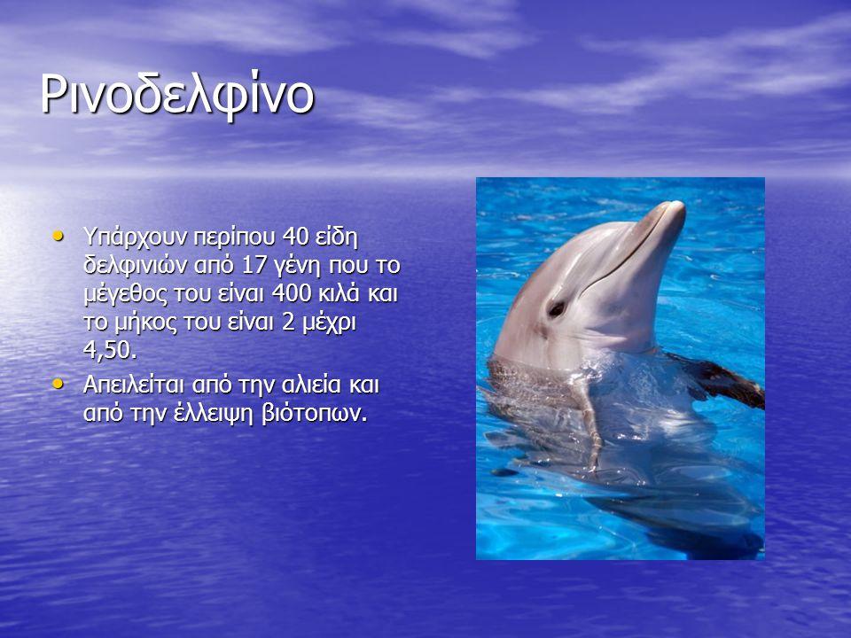 Ρινοδελφίνο Υπάρχουν περίπου 40 είδη δελφινιών από 17 γένη που το μέγεθος του είναι 400 κιλά και το μήκος του είναι 2 μέχρι 4,50. Υπάρχουν περίπου 40