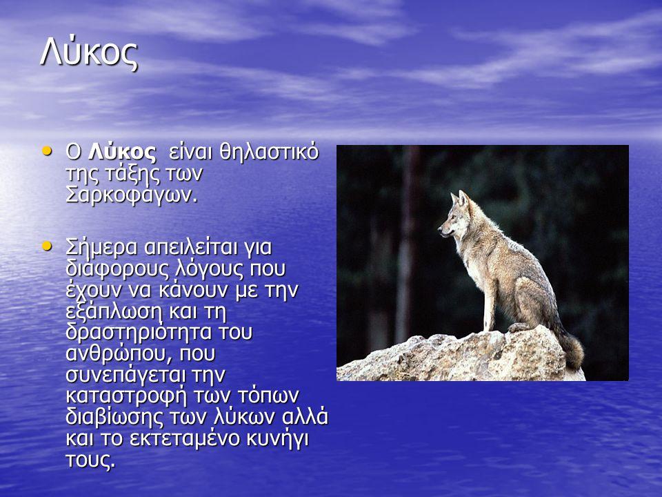 Λύκος Ο Λύκος είναι θηλαστικό της τάξης των Σαρκοφάγων. Σήμερα απειλείται για διάφορους λόγους που έχουν να κάνουν με την εξάπλωση και τη δραστηριότητ