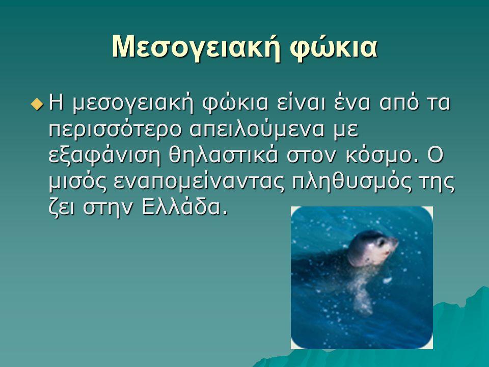 Μεσογειακή φώκια  Η μεσογειακή φώκια είναι ένα από τα περισσότερο απειλούμενα με εξαφάνιση θηλαστικά στον κόσμο. Ο μισός εναπομείναντας πληθυσμός της