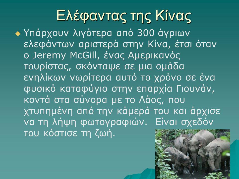 Ελέφαντας της Κίνας   Υπάρχουν λιγότερα από 300 άγριων ελεφάντων αριστερά στην Κίνα, έτσι όταν ο Jeremy McGill, ένας Αμερικανός τουρίστας, σκόνταψε