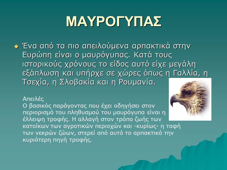 ΜΑΥΡΟΓΥΠΑΣ  Ένα από τα πιο απειλούμενα αρπακτικά στην Ευρώπη είναι ο μαυρόγυπας. Κατά τους ιστορικούς χρόνους το είδος αυτό είχε μεγάλη εξάπλωση και
