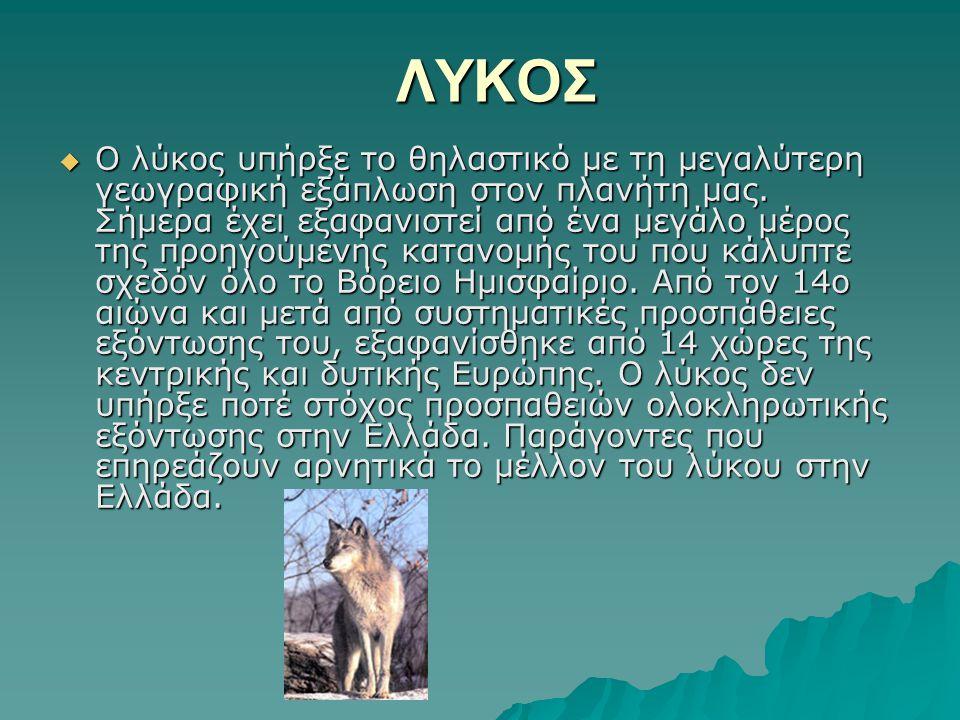 ΛΥΚΟΣ  Ο λύκος υπήρξε το θηλαστικό με τη μεγαλύτερη γεωγραφική εξάπλωση στον πλανήτη μας. Σήμερα έχει εξαφανιστεί από ένα μεγάλο μέρος της προηγούμεν