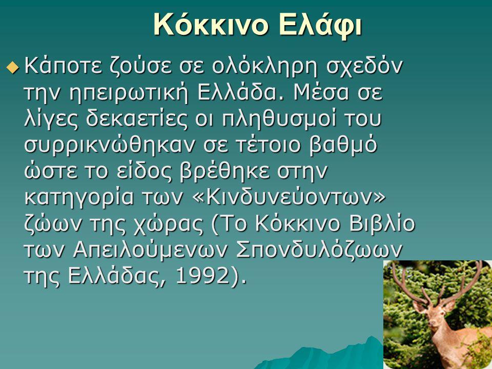 Κόκκινο Ελάφι  Κάποτε ζούσε σε ολόκληρη σχεδόν την ηπειρωτική Ελλάδα. Μέσα σε λίγες δεκαετίες οι πληθυσμοί του συρρικνώθηκαν σε τέτοιο βαθμό ώστε το