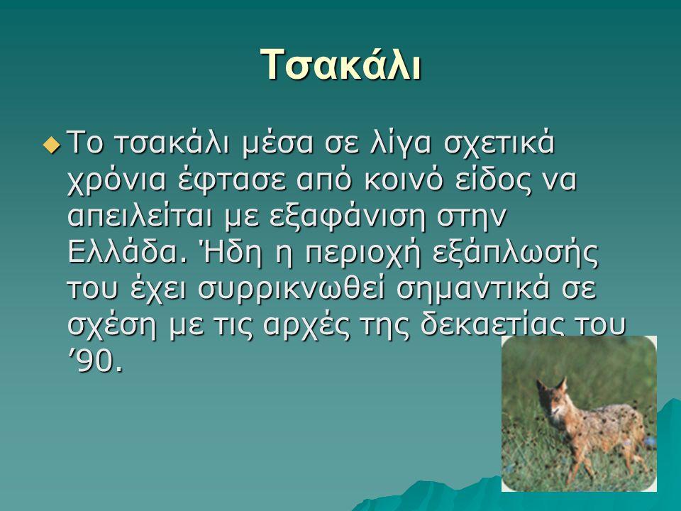 Tσακάλι  Το τσακάλι μέσα σε λίγα σχετικά χρόνια έφτασε από κοινό είδος να απειλείται με εξαφάνιση στην Ελλάδα. Ήδη η περιοχή εξάπλωσής του έχει συρρι