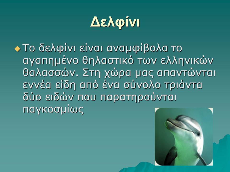 Δελφίνι  Το δελφίνι είναι αναμφίβολα το αγαπημένο θηλαστικό των ελληνικών θαλασσών. Στη χώρα μας απαντώνται εννέα είδη από ένα σύνολο τριάντα δύο ειδ