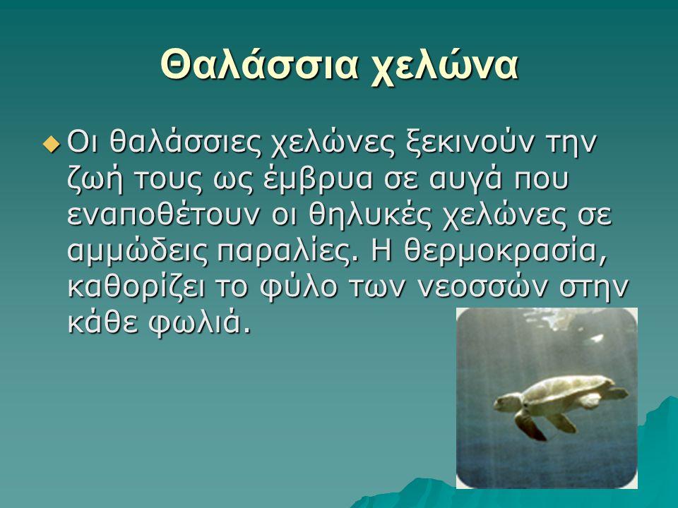 Αγριόγιδο  Σήμερα στην Ελλάδα υπάρχουν δεκαπέντε μικροί πληθυσμοί, διάσπαρτοι στη Β.