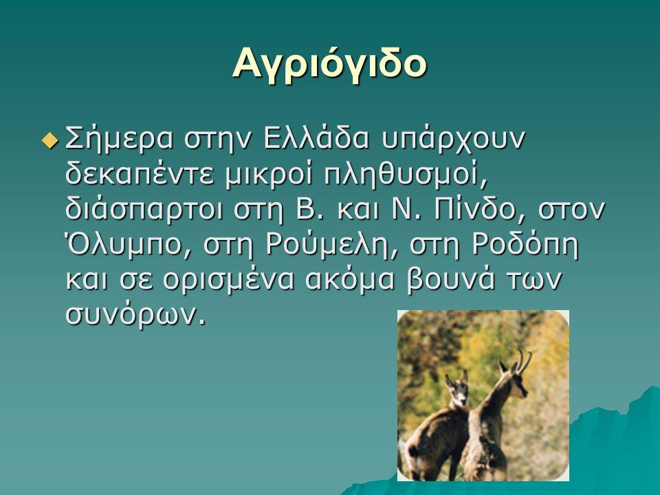 Αγριόγιδο  Σήμερα στην Ελλάδα υπάρχουν δεκαπέντε μικροί πληθυσμοί, διάσπαρτοι στη Β. και Ν. Πίνδο, στον Όλυμπο, στη Ρούμελη, στη Ροδόπη και σε ορισμέ