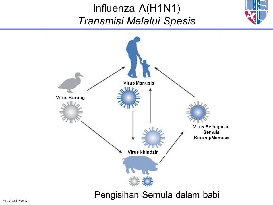 Influenza A(H1N1) Transmisi Melalui Spesis Virus Burung Virus Manusia Virus khindzir Virus Pelbagaian Semula Burung/Manusia Pengisihan Semula dalam ba