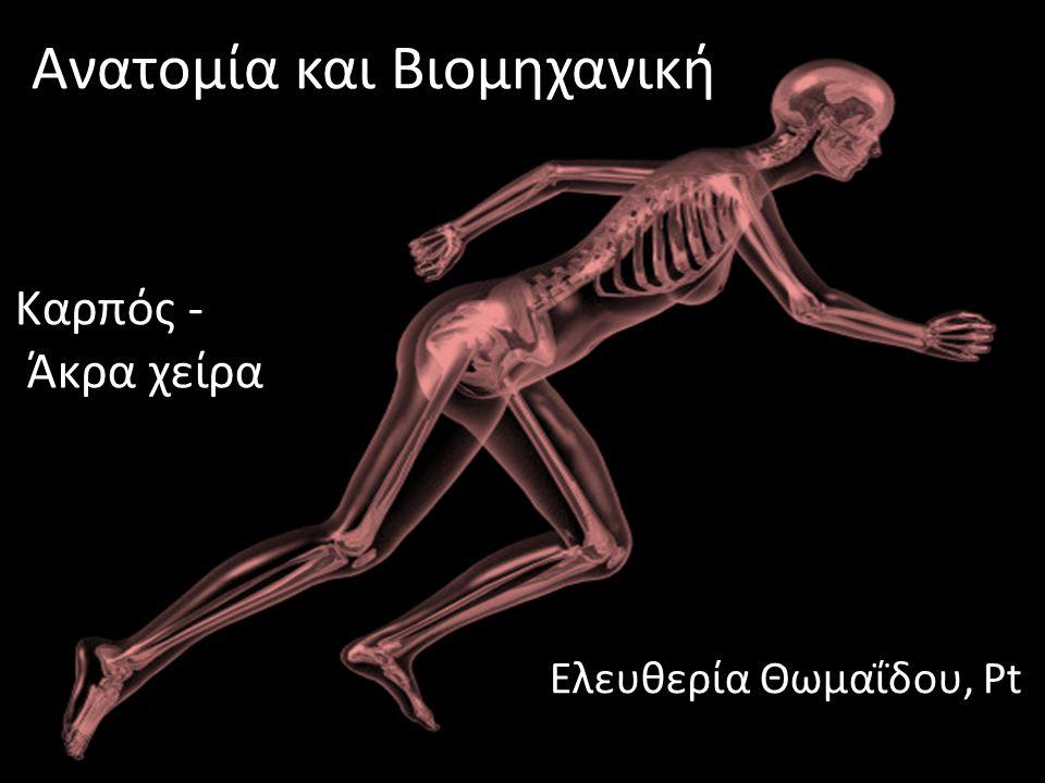 dsfsf Ανατομία και Βιομηχανική Ελευθερία Θωμαΐδου, Pt Καρπός - Άκρα χείρα