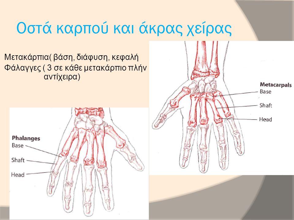 Μέσο νεύρο Κερκιδικός καμπτήρας του καρπού Μακρός Παλαμικός Επιπολής κοινός καμπτήρας δακτύλων Εν τω βάθει κοινός καμπτήρας δακτύλων Ωλένιο νεύρο: Ωλένιος καμπτήρας του καρπού Εν τω βάθει κοινός καμπτήρας των δακτύλων