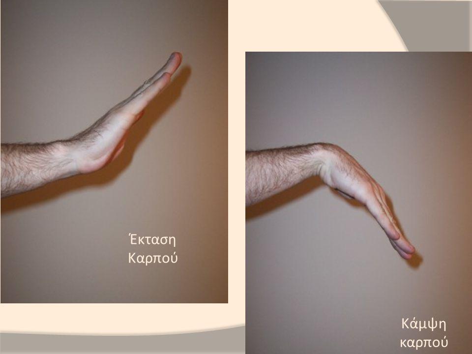 Κερκιδικό νεύρο:  Μακρός και βραχύς κερκιδικός εκτείνων τον καρπό  Κοινός εκτείνων τους δακτύλους  Ωλένιος εκτείνων τον καρπό