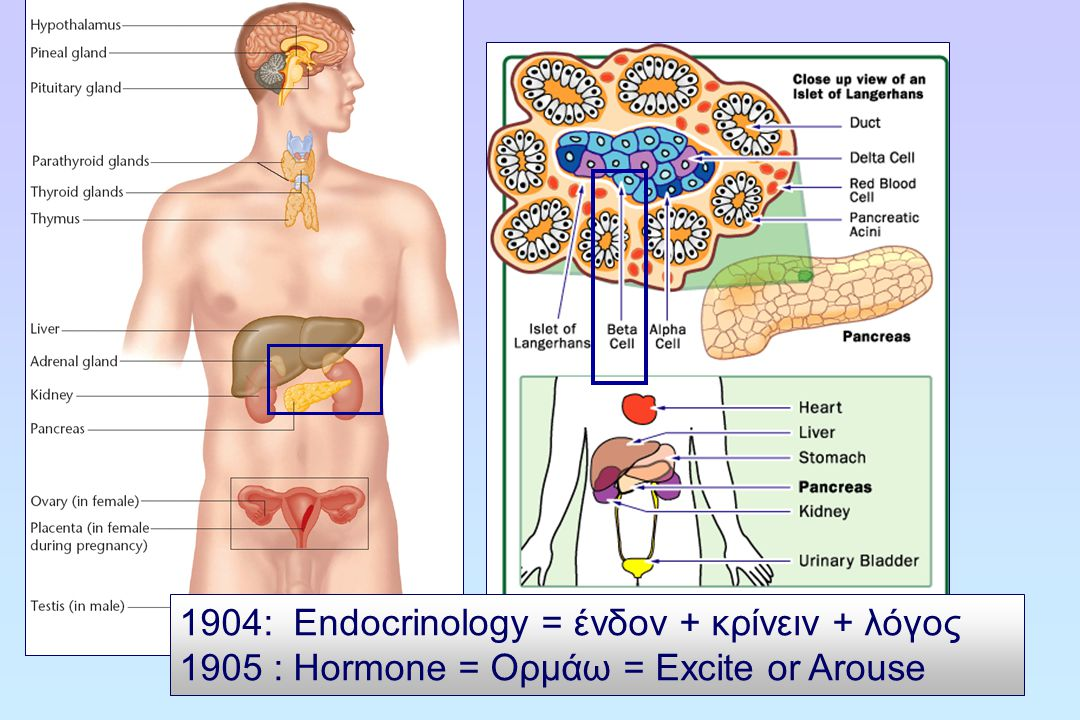 1904: Endocrinology = ένδον + κρίνειν + λόγος 1905 : Hormone = Ορμάω = Excite or Arouse