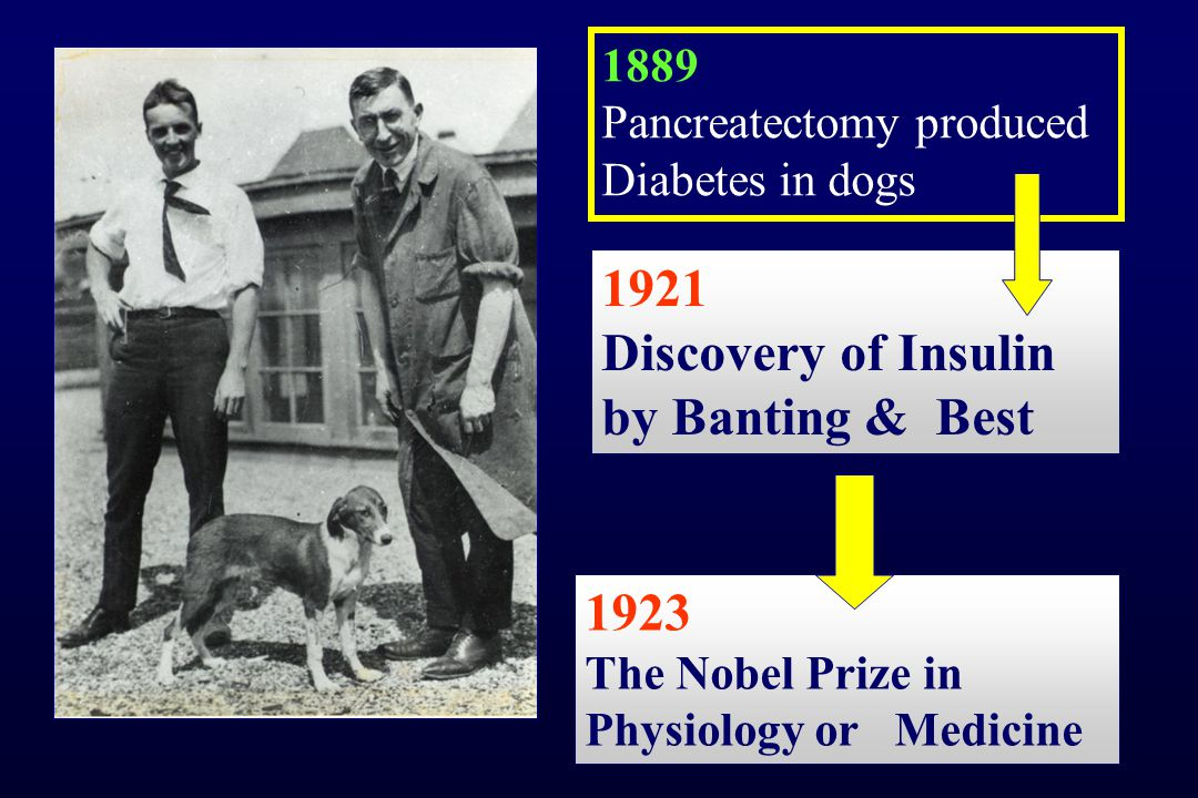 Σακχαρώδης Διαβήτης - μύθος και πραγματικότητα Ο Διαβήτης είναι εμπόδιο στη ζωή Ο Διαβήτης είναι γενετική νόσος Παρατηρείται αύξηση του Διαβήτη Υπάρχει ιδανική θεραπεία, που να μιμείται αποτελεσματικά την παγκρεατική λειτουργία Ο Διαβήτης τύπου 2 δεν εκδηλώνεται στα παιδιά
