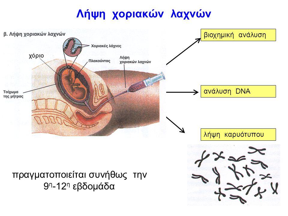 αμνιοπαρακέντηση βιοχημική ανάλυση ανάλυση DNA καλλιέργεια εμβρυικών κυττάρων λήψη καρυότυπου πραγματοποιείται από την 12 η -16 η εβδομάδα