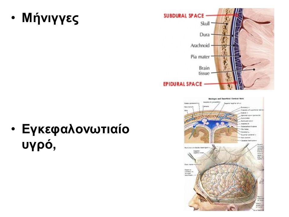 Νωτιαίος μυελός Ο νωτιαίος μυελός είναι μία λεπτή, σχεδόν κυλινδρική στήλη νευρικού ιστού, που προστατεύεται μέσα στο σπονδυλικό σωλήνα.