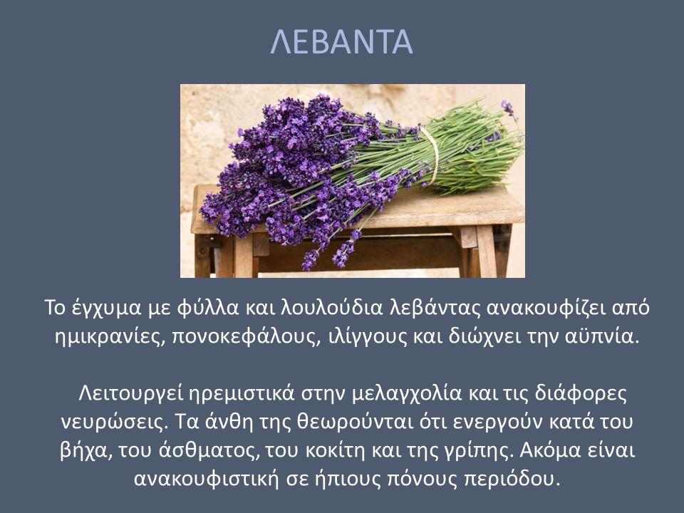 ΛΕΒΑΝΤΑ Το έγχυμα με φύλλα και λουλούδια λεβάντας ανακουφίζει από ημικρανίες, πονοκεφάλους, ιλίγγους και διώχνει την αϋπνία.