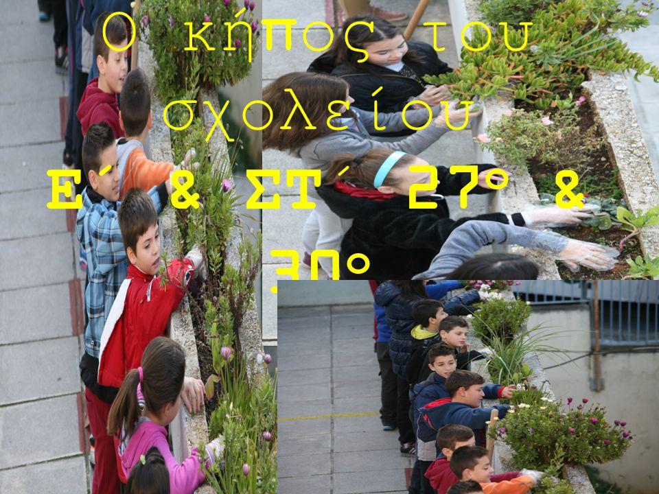 Ο κήπος του σχολείου Ε΄ & ΣΤ΄ 27 ο & 30 ο