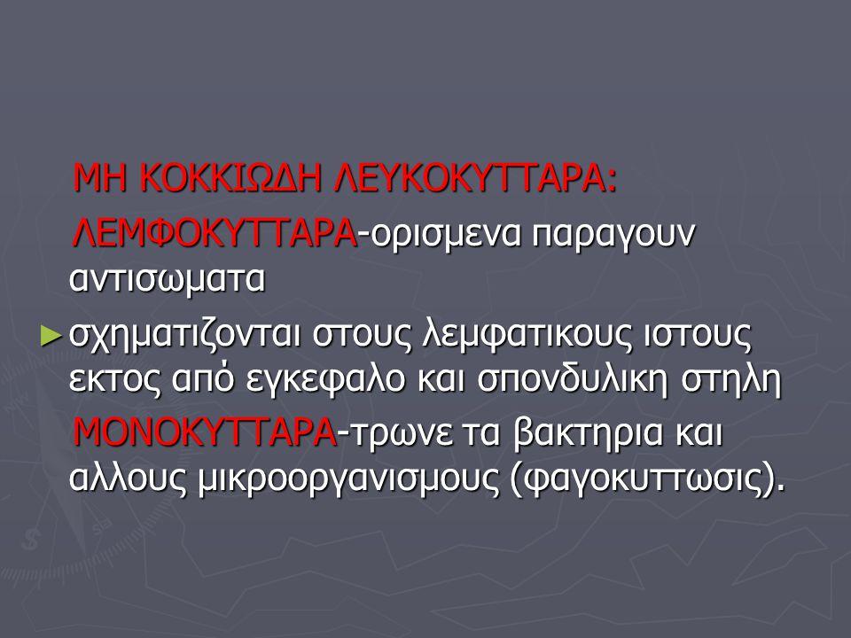 ΜΗ ΚΟΚΚΙΩΔΗ ΛΕΥΚΟΚΥΤΤΑΡΑ: ΜΗ ΚΟΚΚΙΩΔΗ ΛΕΥΚΟΚΥΤΤΑΡΑ: ΛΕΜΦΟΚΥΤΤΑΡΑ-ορισμενα παραγουν αντισωματα ΛΕΜΦΟΚΥΤΤΑΡΑ-ορισμενα παραγουν αντισωματα ► σχηματιζοντα