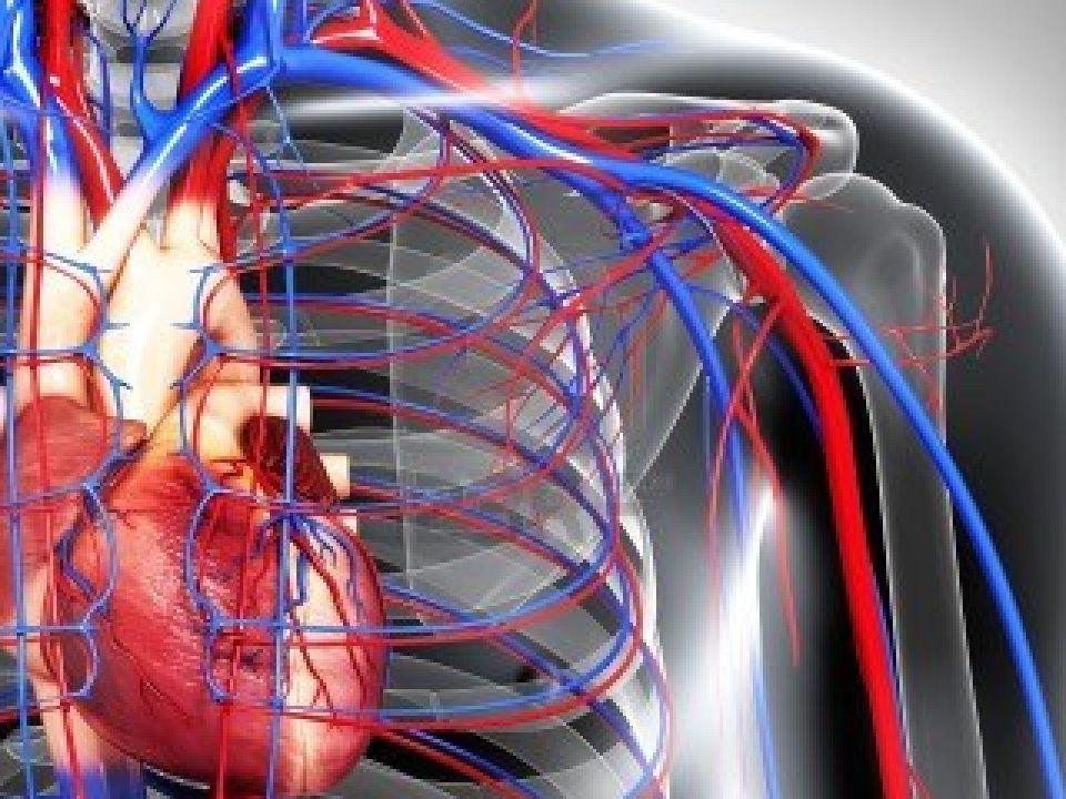 ► Το αιμα αντλειται από την καρδια και πηγαινει σε ολο το σωμα μεσω ενός μεταφορικου συστηματος από αρτηριες και φλεβες.
