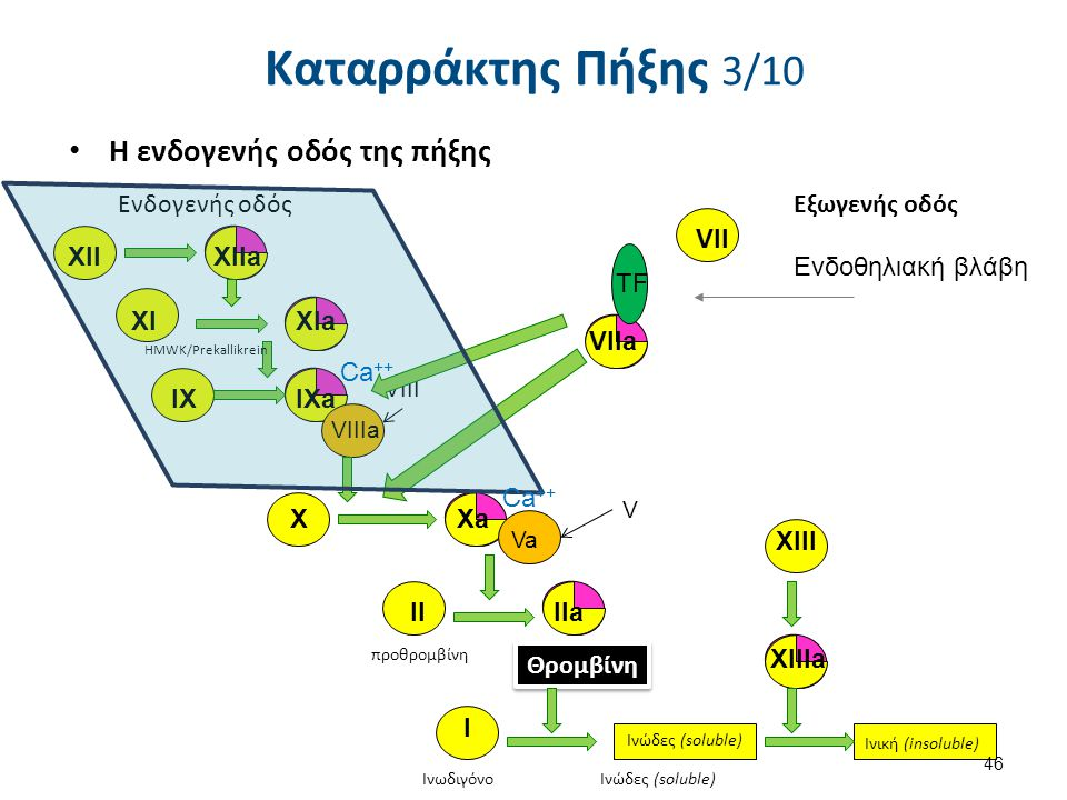 VIIa Η ενδογενής οδός της πήξης XIIXIIa XIaXI IXIXa VIIIa XXa Va HMWK/Prekallikrein προθρομβίνη Θρομβίνη XIII XIIIa Ινωδιγόνο Ινώδες (soluble) Ινική (