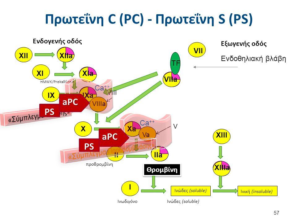 VIIa XIIXIIa XIaXI IX IXa VIIIa X Xa Va HMWK/Prekallikrein προθρομβίνη Θρομβίνη XIII XIIIa Ινωδιγόνο Ινώδες (soluble) Ινική (insoluble) VII TF Ενδοθηλ