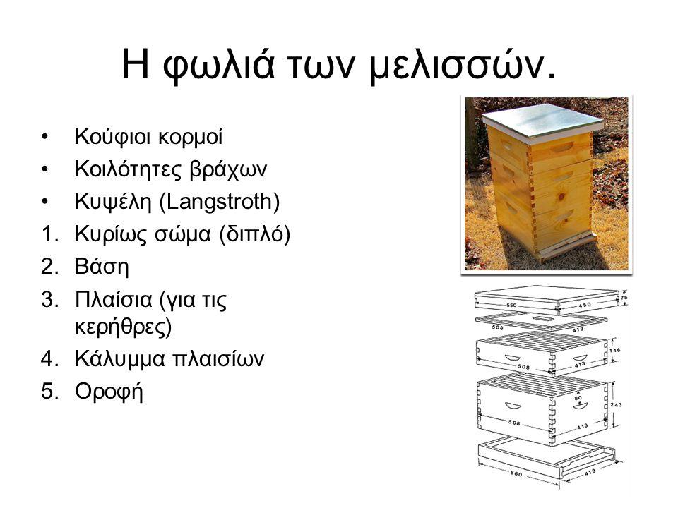 Η φωλιά των μελισσών. Κούφιοι κορμοί Κοιλότητες βράχων Κυψέλη (Langstroth) 1.Κυρίως σώμα (διπλό) 2.Βάση 3.Πλαίσια (για τις κερήθρες) 4.Κάλυμμα πλαισίω