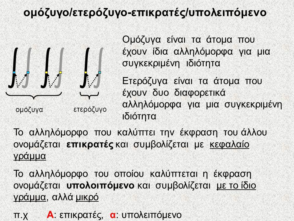 ομόζυγο/ετερόζυγο-επικρατές/υπολειπόμενο ομόζυγα ετερόζυγο Ομόζυγα είναι τα άτομα που έχουν ίδια αλληλόμορφα για μια συγκεκριμένη ιδιότητα Ετερόζυγα είναι τα άτομα που έχουν δυο διαφορετικά αλληλόμορφα για μια συγκεκριμένη ιδιότητα Το αλληλόμορφο που καλύπτει την έκφραση του άλλου ονομάζεται επικρατές και συμβολίζεται με κεφαλαίο γράμμα Το αλληλόμορφο του οποίου καλύπτεται η έκφραση ονομάζεται υπολοιπόμενο και συμβολίζεται με το ίδιο γράμμα, αλλά μικρό π.χ Α: επικρατές, α: υπολειπόμενο