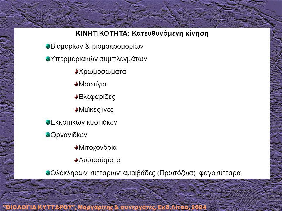 ΒΙΟΛΟΓΙΑ ΚΥΤΤΑΡΟΥ , Μαργαρίτης & συνεργάτες, Εκδ.Λίτσα, 2004 ΜΙΚΡΟΪΝΙΔΙΑ ΑΚΤΙΝΗΣ: ΠΟΛΥΜΕΡΙΣΜΕΝΗ ΜΟΡΦΗ (F) ΜΟΡΙΩΝ ΑΚΤΙΝΗΣ (G) ΔΙΑΜΕΤΡΟΥ 50-90 A o Ακτίνη α: Μυϊκά κύτταρα Ακτίνη β, γ: Μη μυϊκά κύτταρα Συμμετοχή ακτίνης (εντοπίζεται με ανοσοφθορισμό σε όλους τους κυτταρικούς τύπους): Στη δημιουργία μικρολαχνών Στη μιτωτική άτρακτο Στη μετακίνηση οργανιδίων Στο σύστημα ακτο-μυοσίνης: σύσπαση & έκταση κυττάρων Στη διαμόρφωση του κυτταρικού σχήματος Στην επικοινωνία εξωκυττάριου & ενδοκυττάριου χώρου
