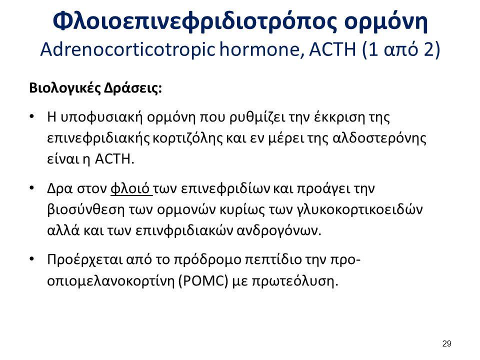 Φλοιοεπινεφριδιοτρόπος ορμόνη Adrenocorticotropic hormone, ACTH (1 από 2) Βιολογικές Δράσεις: Η υποφυσιακή ορμόνη που ρυθμίζει την έκκριση της επινεφρ