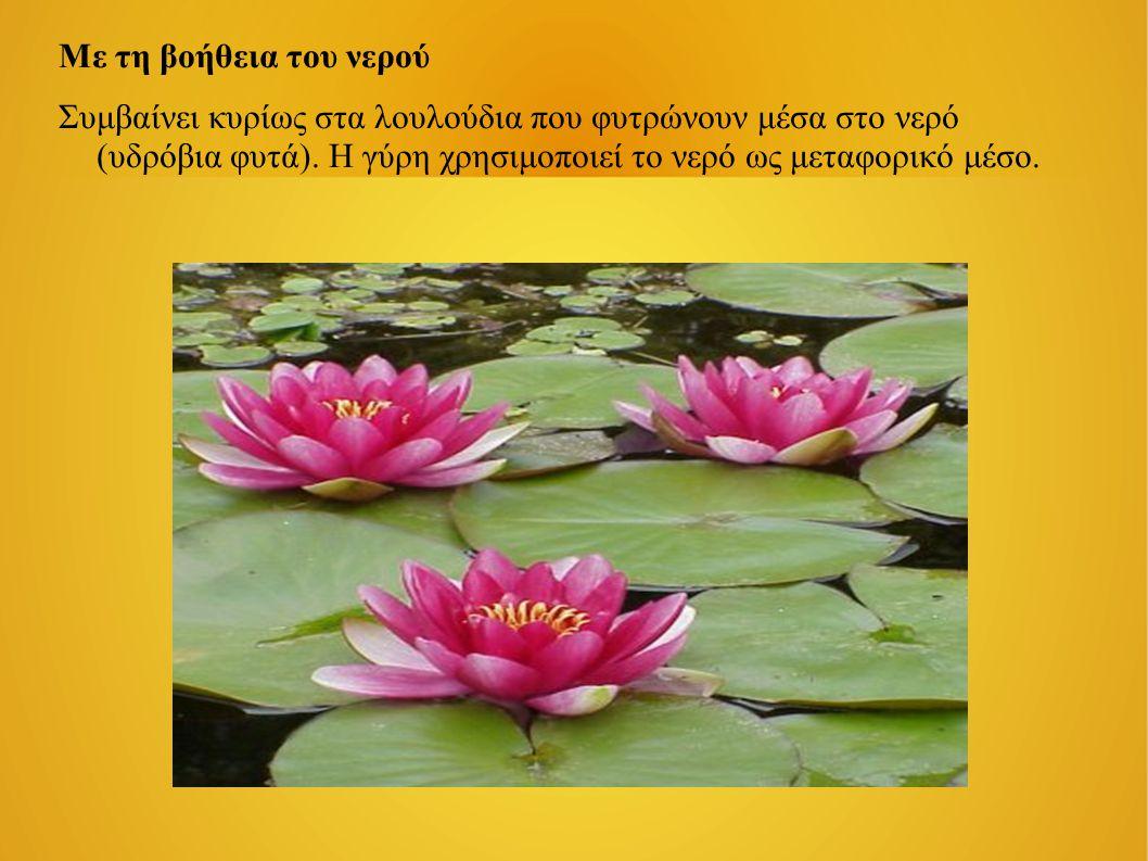 Με τη βοήθεια του νερού Συμβαίνει κυρίως στα λουλούδια που φυτρώνουν μέσα στο νερό (υδρόβια φυτά). Η γύρη χρησιμοποιεί το νερό ως μεταφορικό μέσο.