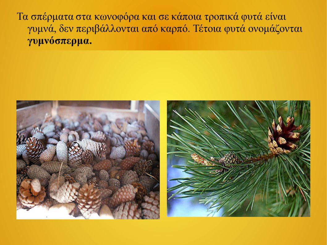Τα σπέρματα στα κωνοφόρα και σε κάποια τροπικά φυτά είναι γυμνά, δεν περιβάλλονται από καρπό. Τέτοια φυτά ονομάζονται γυμνόσπερμα.