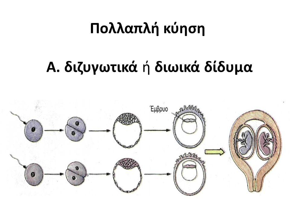 Πολλαπλή κύηση Α. διζυγωτικά ή διωικά δίδυμα