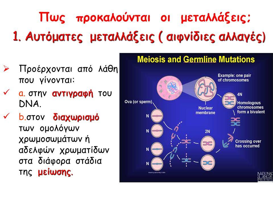 Πως προκαλούνται οι μεταλλάξεις;  Προέρχονται από λάθη που γίνονται: αντιγραφή a. στην αντιγραφή του DNA. διαχωρισμό μείωσης. b.στον διαχωρισμό των ο