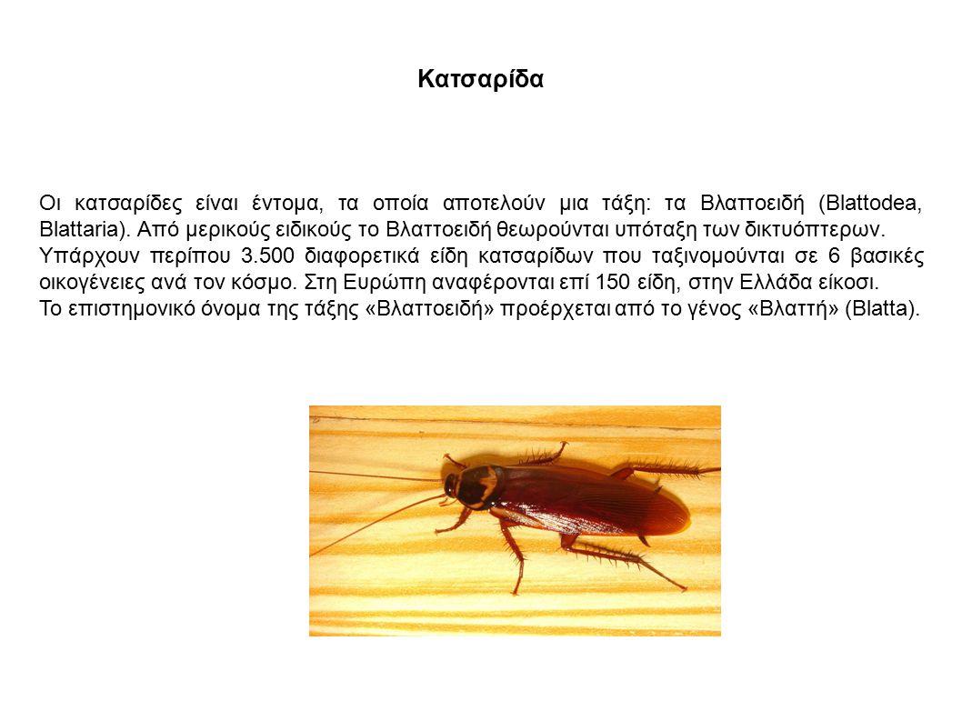 Κατσαρίδα Οι κατσαρίδες είναι έντομα, τα οποία αποτελούν μια τάξη: τα Βλαττοειδή (Blattodea, Blattaria). Από μερικούς ειδικούς το Βλαττοειδή θεωρούντα