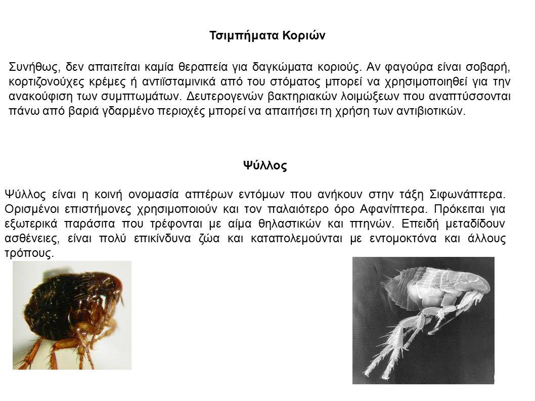 Τσιμπήματα Κοριών Συνήθως, δεν απαιτείται καμία θεραπεία για δαγκώματα κοριούς.