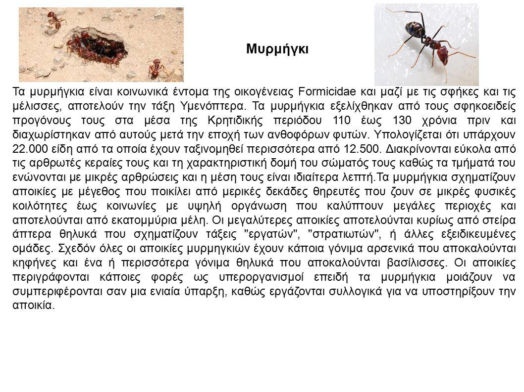 Μυρμήγκι Τα μυρμήγκια είναι κοινωνικά έντομα της οικογένειας Formicidae και μαζί με τις σφήκες και τις μέλισσες, αποτελούν την τάξη Υμενόπτερα. Τα μυρ