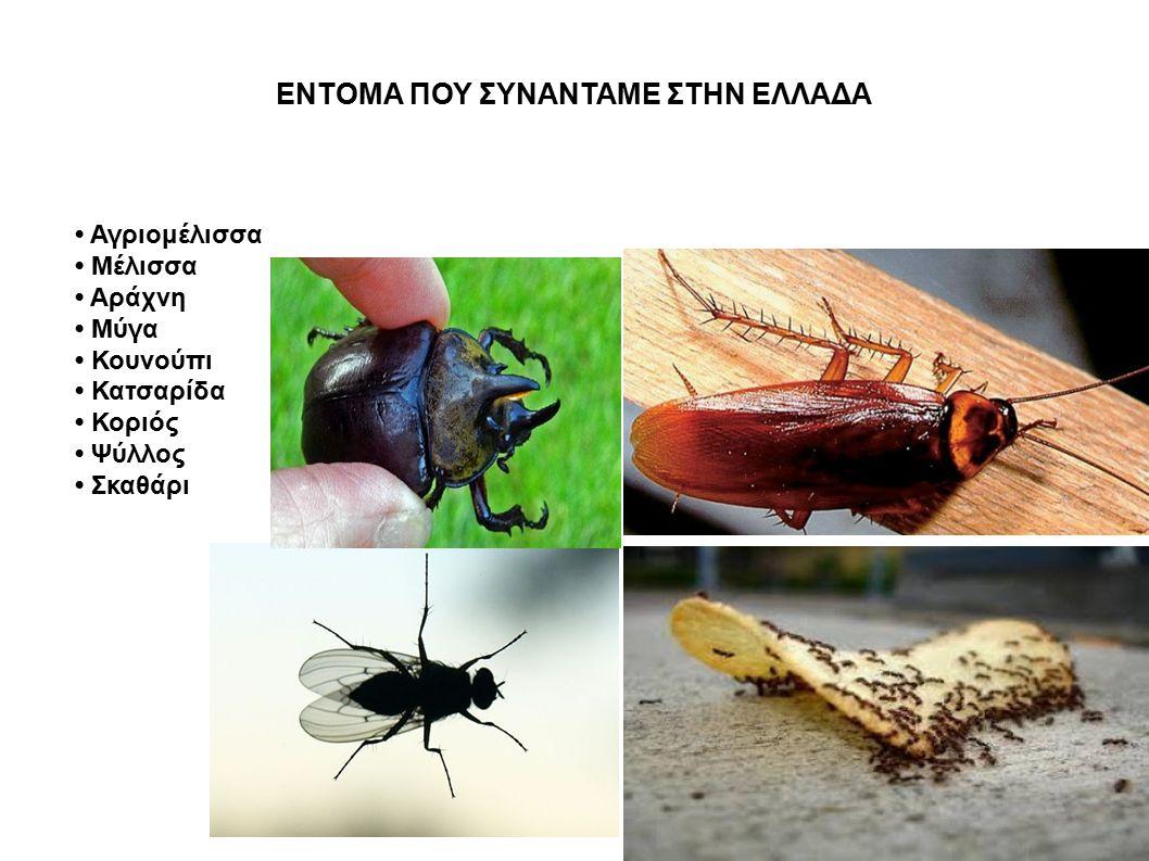 ΕΝΤΟΜΑ ΠΟΥ ΣΥΝΑΝΤΑΜΕ ΣΤΗΝ ΕΛΛΑΔΑ Αγριομέλισσα Μέλισσα Αράχνη Μύγα Κουνούπι Κατσαρίδα Κοριός Ψύλλος Σκαθάρι