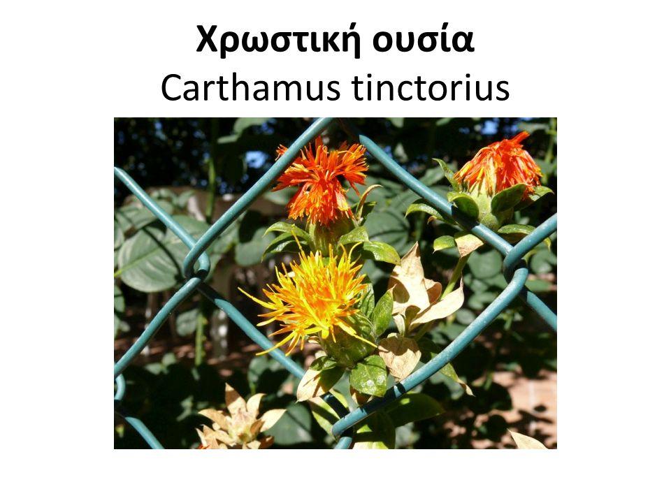 Χρωστική ουσία Carthamus tinctorius