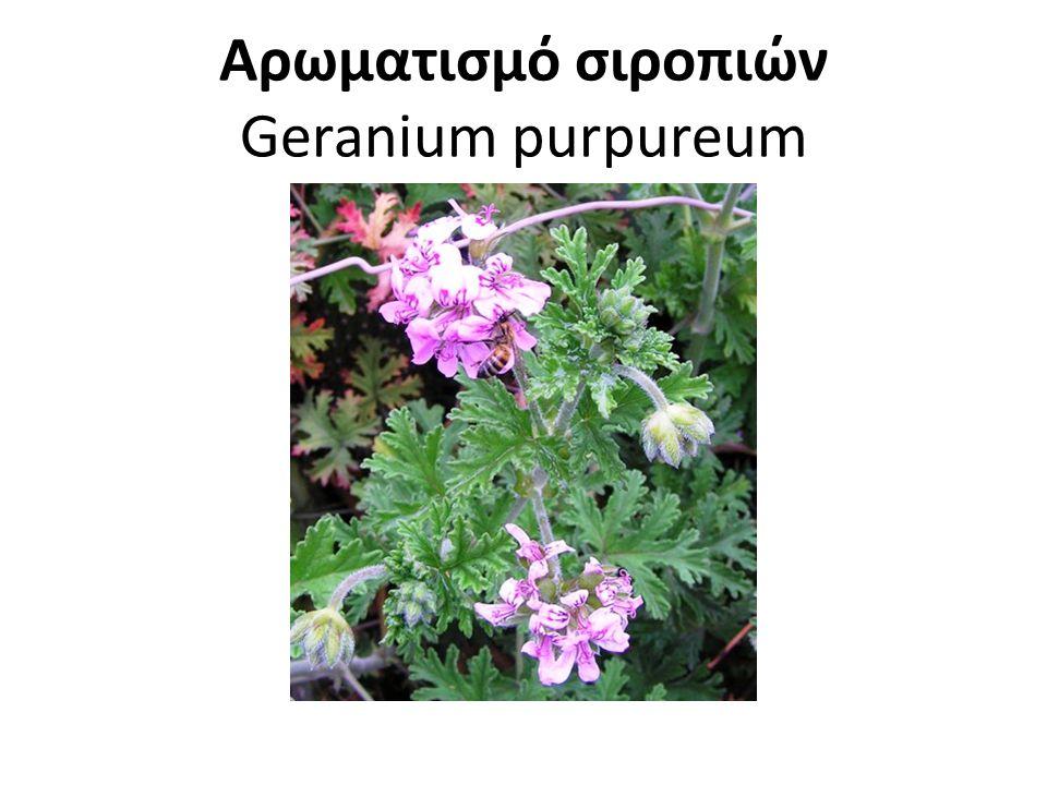 Αρωματισμό σιροπιών Geranium purpureum
